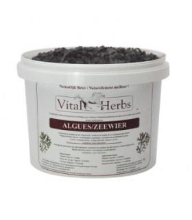 VITAL HERBS Seaweed – Algi morskie 2 kg